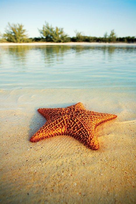 Conte des étoiles de mer    dans à méditer 426710_490259214320098_387283133_nbahamas1